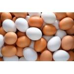雞蛋的迷思